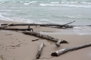 Nature's Driftwood arrangements