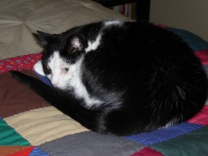Woody cat curled up on my quilt